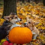Taking Care of Your Family Pet During Halloween