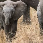 A Guide to a Safari Vacation